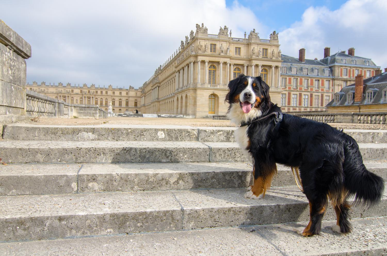 Jodie dürfte einer der wenigen Nicht-Blinden-Hunde sein, der es je in die Gärten von Versailles geschafft hat.