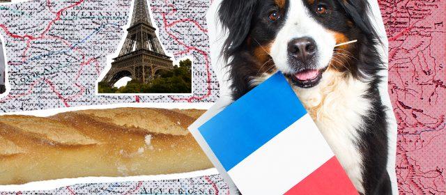Auf einen Blick: Mit Hund nach Frankreich