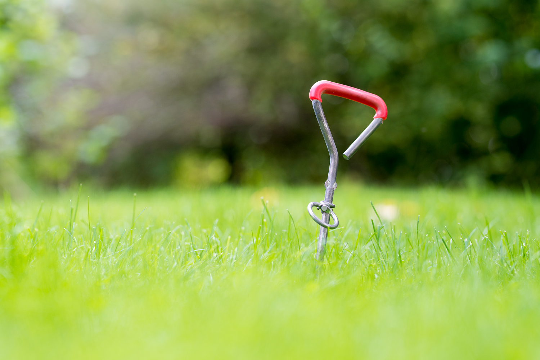 Praktischer kleiner Helfer: Den Erdhaken einfach in den Boden drehen, Leine festmachen, fertig.