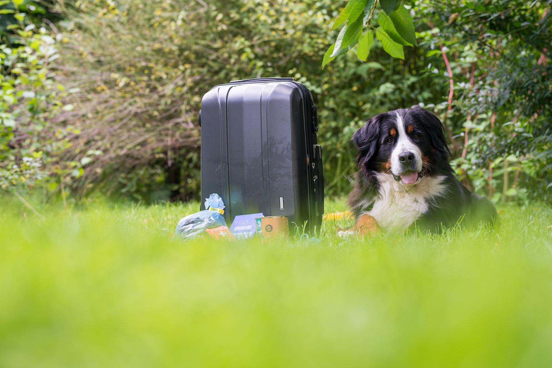 Jodie hat gepackt - es kann losgehen!