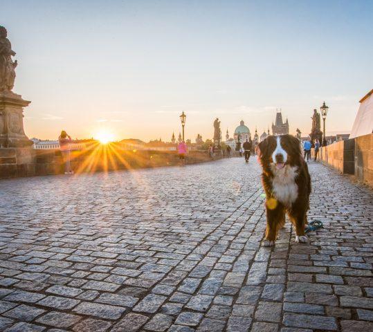 Prag – die Stadt für Frühaufsteher