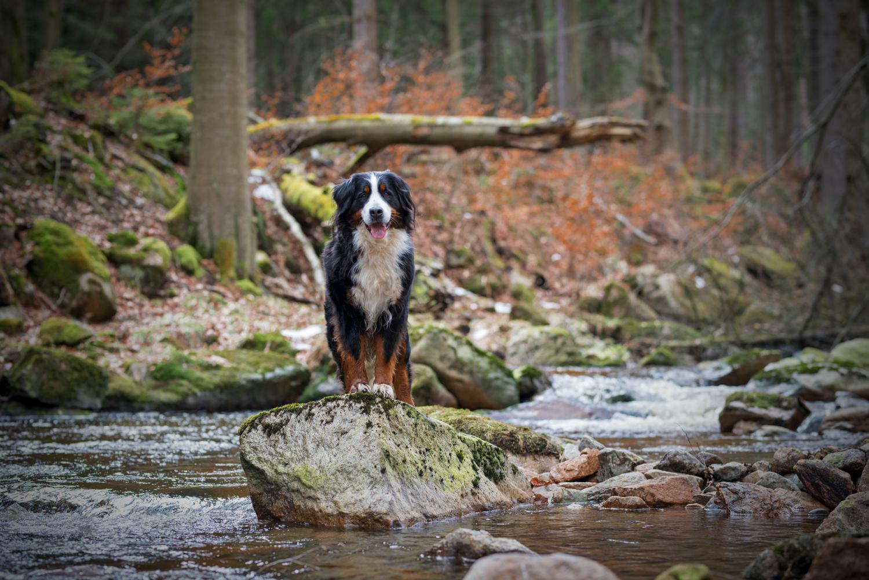 Wildes Wasser: Jodie in der Ilse.
