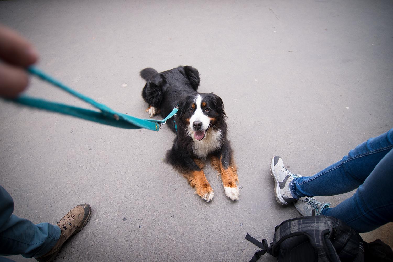 Da braucht auch Hund eine kleine Pause: Jodie nach dem Aufstieg auf die Bastei. Übrigens: Es gibt dort auch eine kleine Hundestation, wo der Vierbeiner trinken kann.