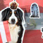 Auf einen Blick: Mit Hund nach Österreich