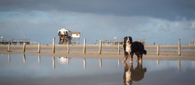 Doppelbesuch an der Nordseeküste