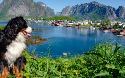 Mit Hund auf die Lofoten