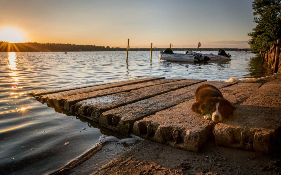 Mit Hund nach Waren – Kurzurlaub an der Seenplatte
