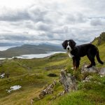 Mit Hund nach Schottland – Fragen und Antworten zu unserer Reise