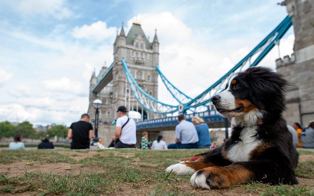 Mit Hund nach London