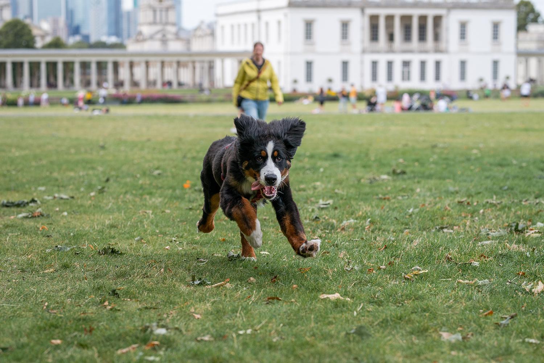 Ceeley flitzt im Greenwich Park