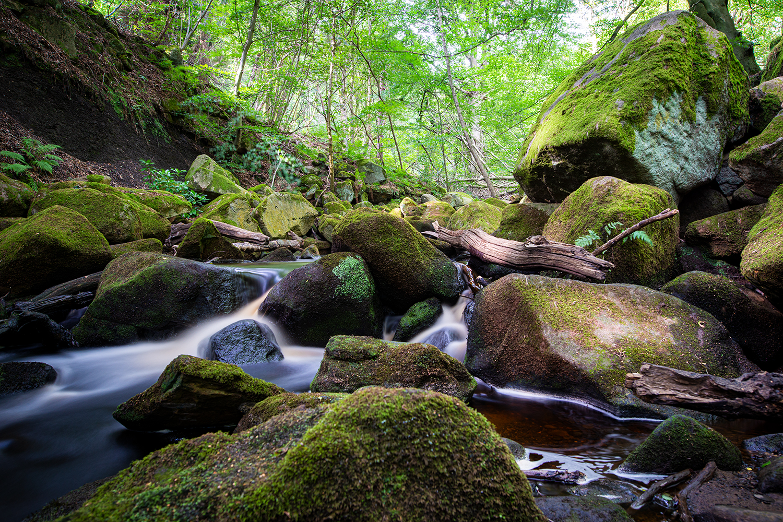 Burbage Brook heißt der kleine Fluss, der durch die Padley Gorge fließt.