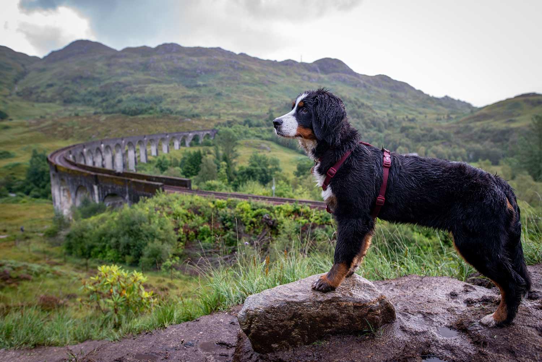 Nass, aber zufrieden: Ceeley am Glenfinnan Viadukt.