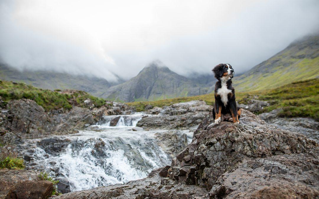 Insel der Burgen und Feen: Mit Hund auf die Isle of Skye