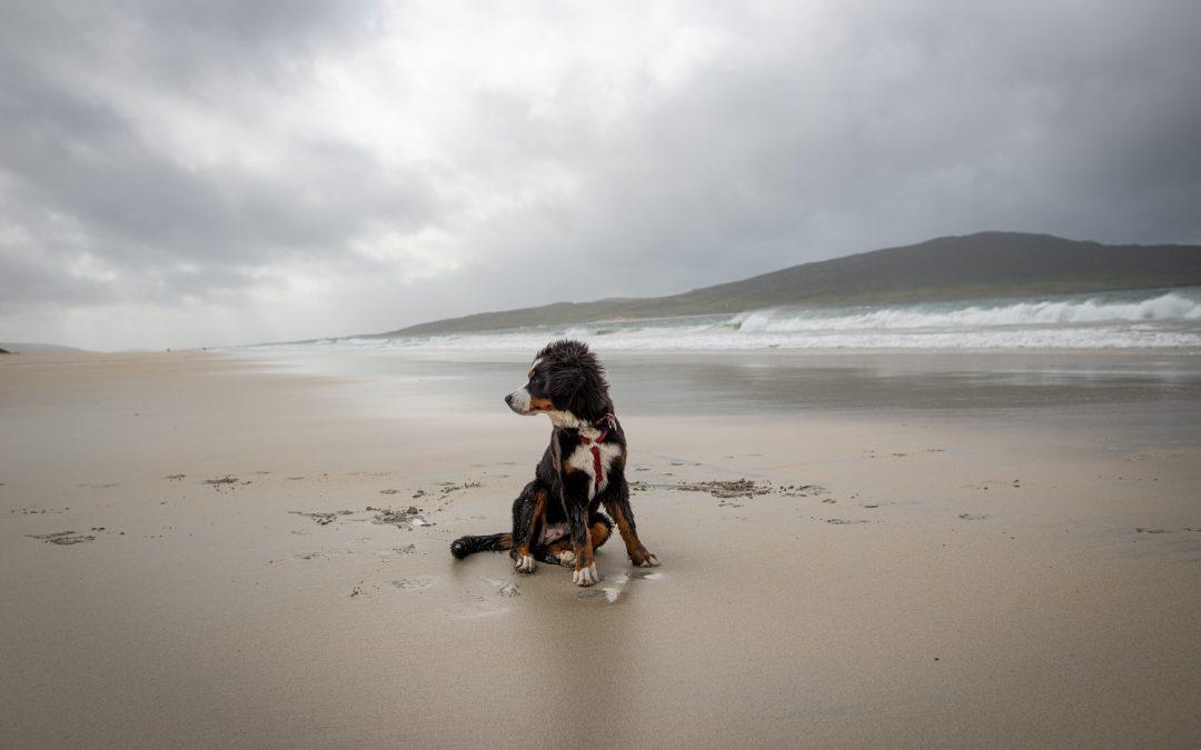 Traumstrände und schottische Einsamkeit: Lewis & Harris mit Hund
