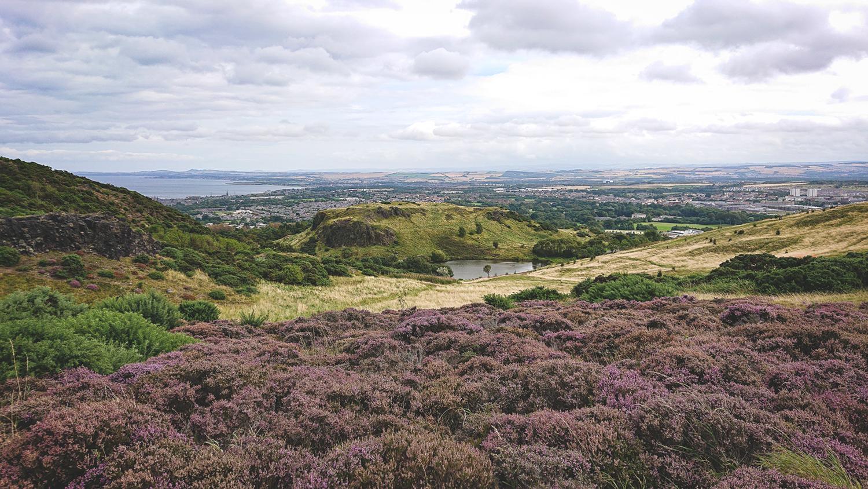 Heide im Holyrood-Park
