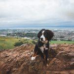 Mit Hund nach Edinburgh