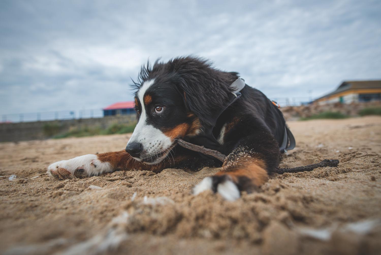 Ceeley am Strand von Fraserburgh