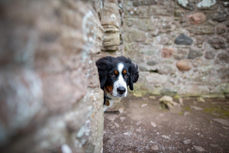 Ceeley im Dunnottar Castle