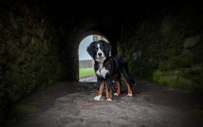 Mit Hund auf Whiskeys Pfaden – Schottlands Osten
