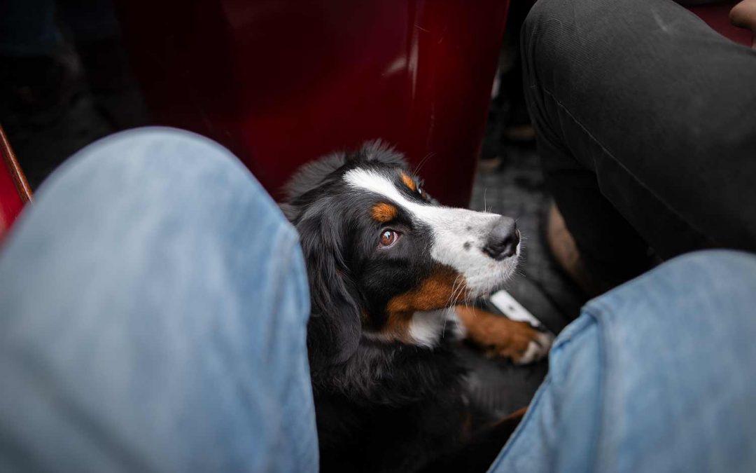 Venedig des Nordens: mit Hund in Brügge