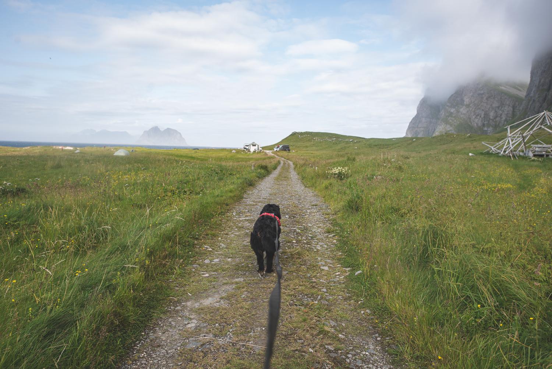 Auf dem Rückweg nach Nordlandshagen.