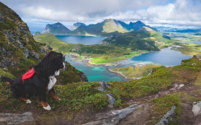 Ein steiles Stück: Mit Hund auf den Offersøykammen